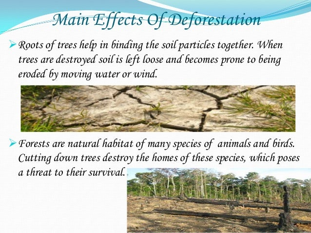 deforestation effects and consequences Deforestation - causes, effects and solutions: deforestation in simple term means the felling and clearing of forest cover or tree plantations in order to accommodate agricultural, industrial or urban use.