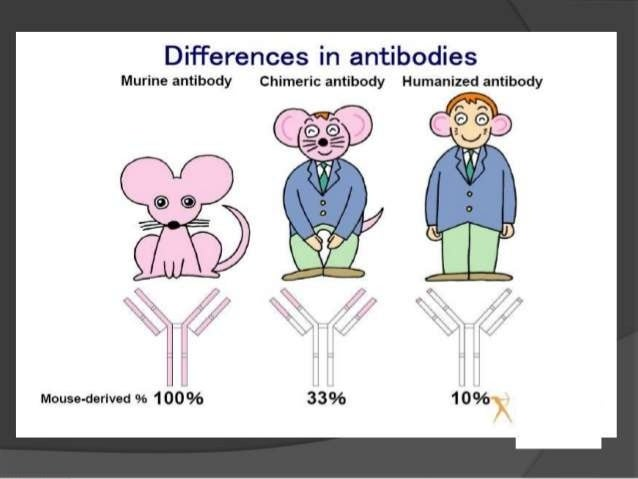 Humanized antibody