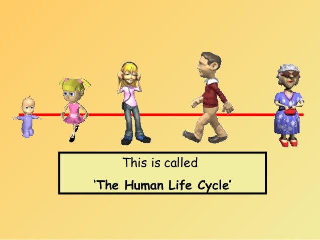 Human life stages for kids - photo#22