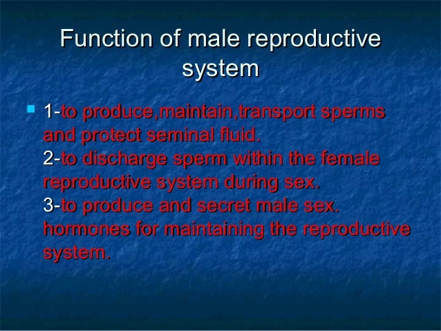 in human males the urethra is used for transport of