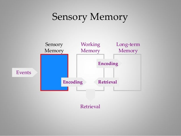 short essay about human memory The human memory consists of a process in which memories are stored and remembered term papers: short-term memory affects color perception in context.
