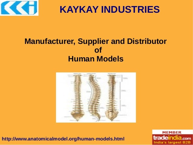 KAYKAY INDUSTRIES http://www.anatomicalmodel.org/human-models.html Manufacturer, Supplier and Distributor of Human Models
