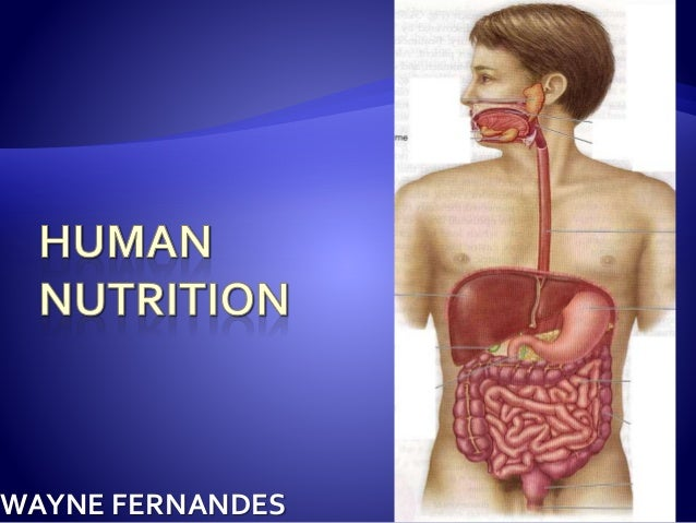 human nutrition Hn 196 nutrition 3 hours provides a foundation in the basic principles of human nutrition in maintaining and promoting health through good dietary choices.
