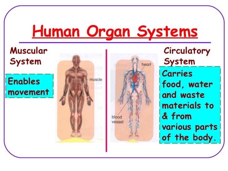 Human Organ Systems Lesson 2