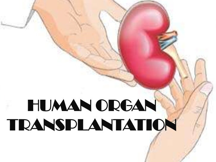 "kidney transplant research paper Organ black market print this paper will argue that the best solution to the of organ purchase because ""for each successful kidney transplant."