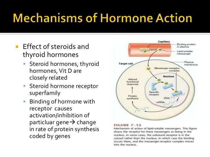 thyroid hormones steroids