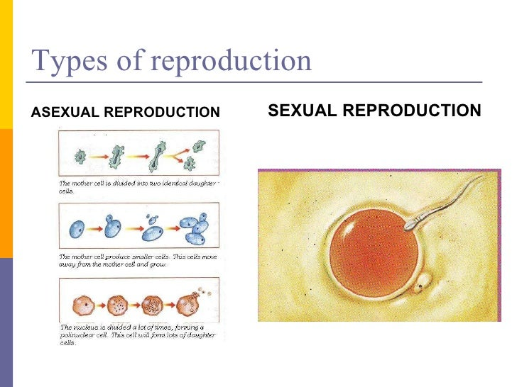 Asexual reproduction among humans