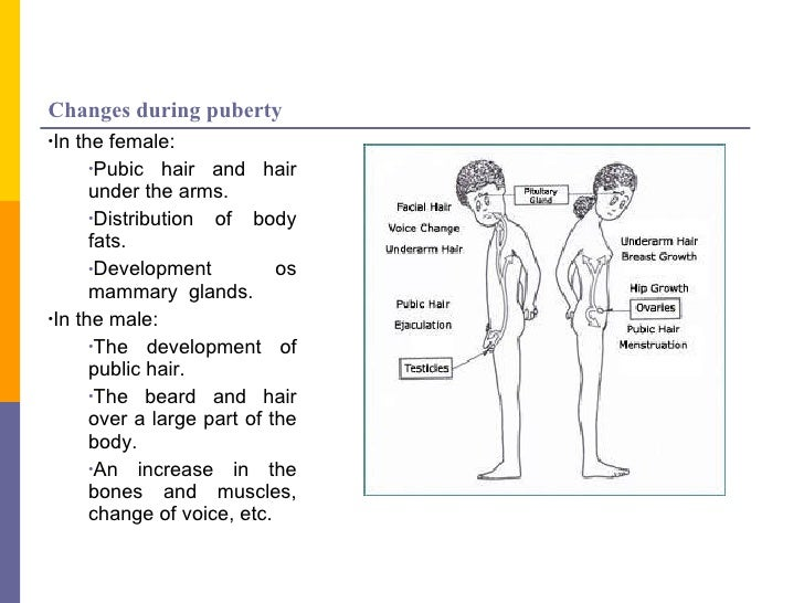 """biological changes in males and females during puberty 25 comments on """"select population of females turn into males during puberty, growing male genitalia."""