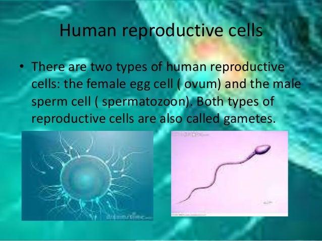 Human reproduction Slide 3