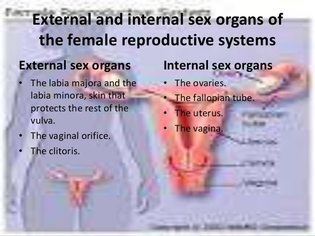 External and internal sex organs of the female reproductive systems External sex organs • The labia majora and the labia m...