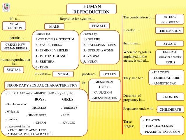 Human reproduction. mindmap. english