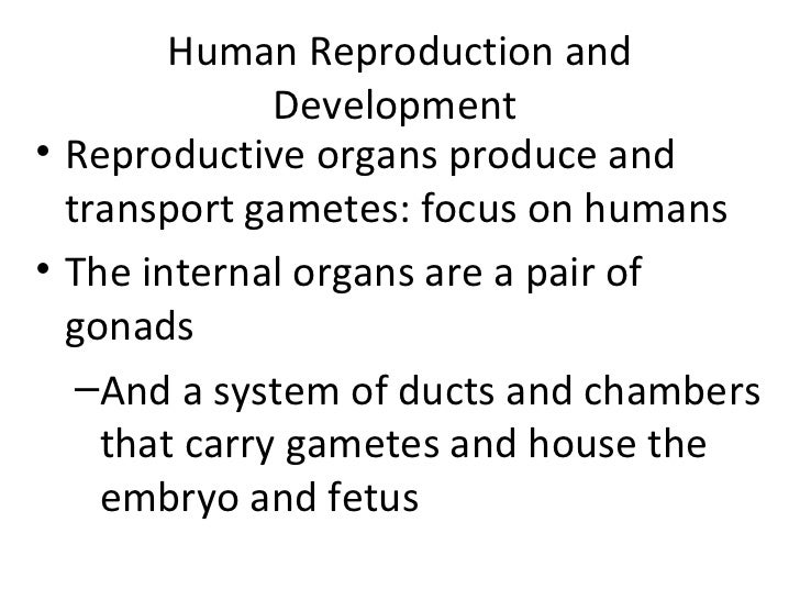Human Reproduction and Development  <ul><li>Reproductive organs produce and transport gametes: focus on humans </li></ul><...