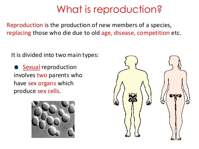 Types of sexual reproduction in human