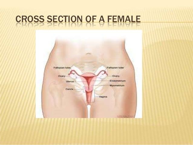 Sperm outside the body