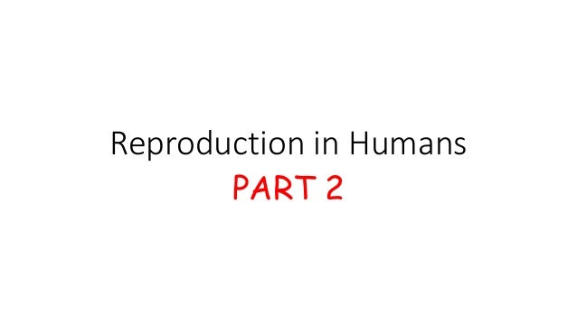 Reproduction in Humans PART 2