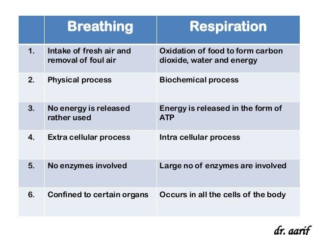 Human Respiration