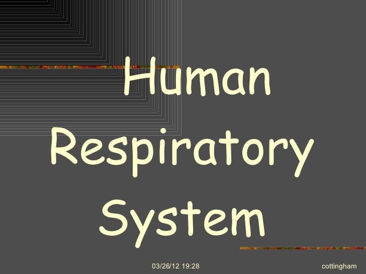 HumanRespiratory  System    03/26/12 19:28   cottingham