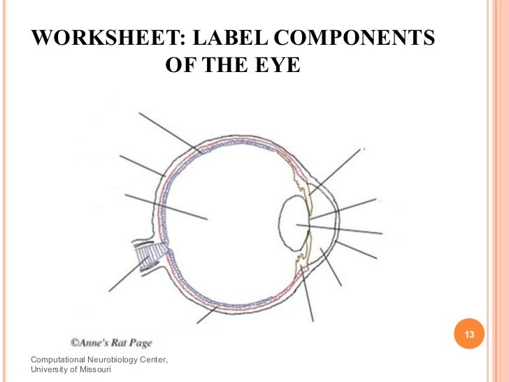 Human Sensors – Structure of the Human Eye Worksheet