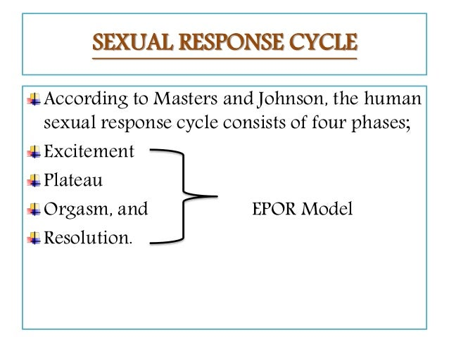 What are the four phases of the sexual response cycle according to masters and johnson