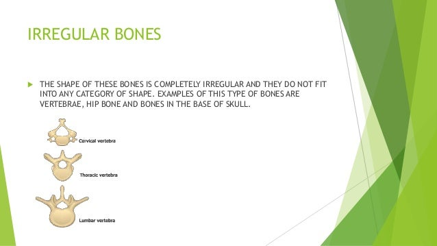 Human Skeleton And Types Of Bones