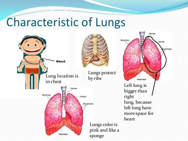 Humans Respiration Systemfor Sidang