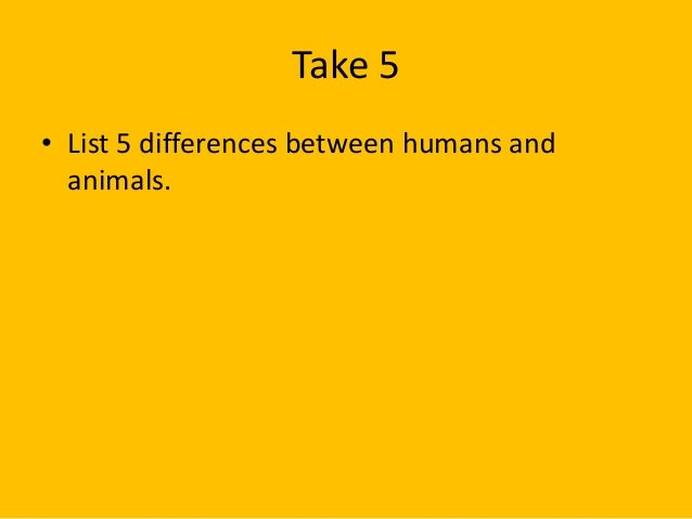 Animals should be treated like humans essay