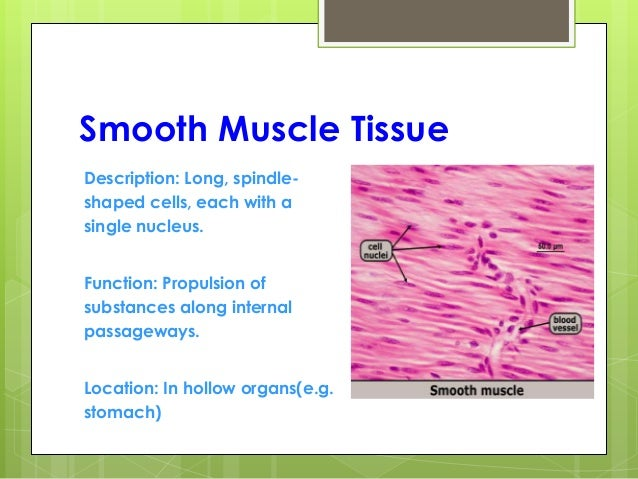 Parts Of The Leg And Foot Muscles Of The Leg Part 1 Posterior  partment Anatomy as well Base Of The Heart likewise Benefits Of Elken Spirulina moreover Bemer besides Digestive System Structure And Function Ppt. on circulatory system functions