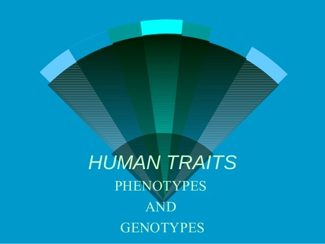 HUMAN TRAITS  PHENOTYPES      AND   GENOTYPES