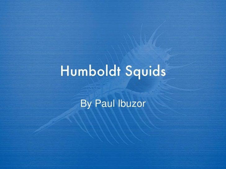Humboldt Squids By Paul Ibuzor