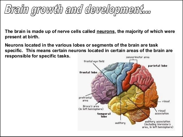 Human Development-Chapter 9, Intellectual Development of Infants