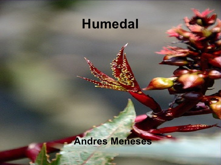 Humedal Andres Meneses