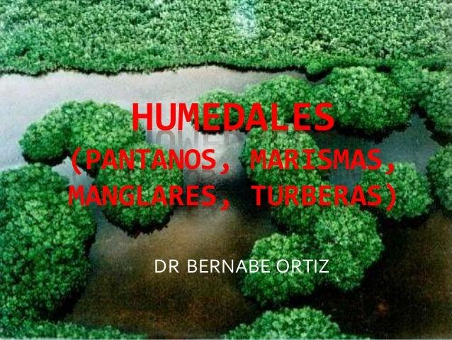 HUMEDALES (PANTANOS, MARISMAS, MANGLARES, TURBERAS) DR BERNABE ORTIZ