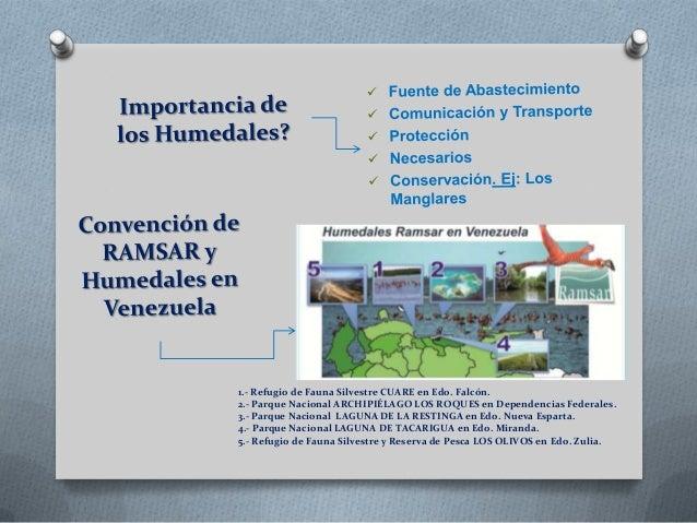 Humedales venezuela fabian Slide 3