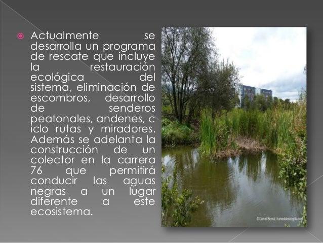 Es uno de los pocos humedales que no está afectado actualmente por los desarrollos urbanísticos de una capital en constant...