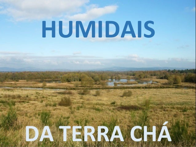 HUMIDAIS DA TERRA CHÁ