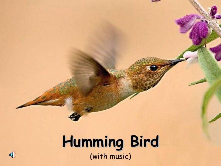 Hummingbirds    (with music)