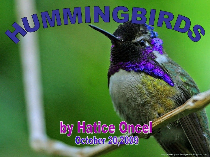 HUMMINGBIRDS by Hatice Oncel http://desktop-cool-wallpapers.blogspot.com / October 20,2009
