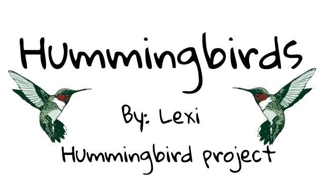 Hummingbirds By: Lexi Hummingbird project