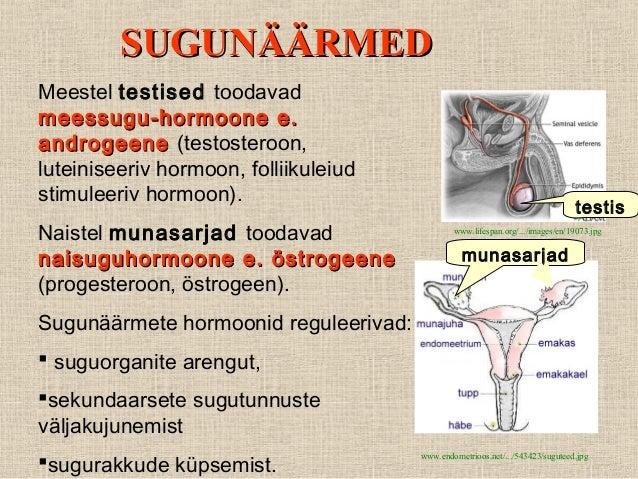 looduslik östrogeen
