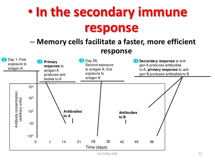 hca 240 appendix c immune response and Immune responses to therapeutic protein products may pose problems for both patient safety and product efficacy immunologically based adverse events, such as anaphylaxis, cytokine release.