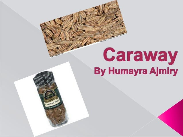All details About Caraway by Humayra Ajmiry