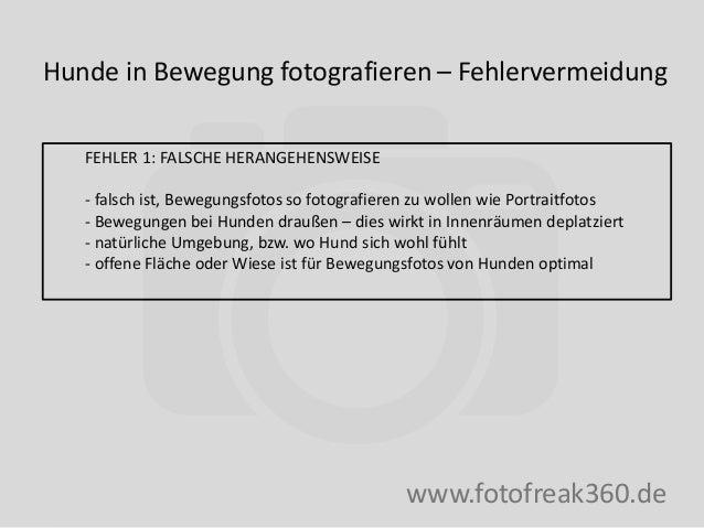 Hunde in Bewegung fotografieren – Fehlervermeidung www.fotofreak360.de FEHLER 1: FALSCHE HERANGEHENSWEISE - falsch ist, Be...