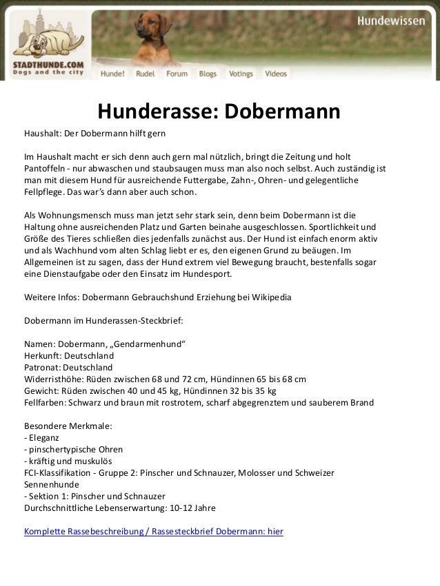 Dobermann herkunft