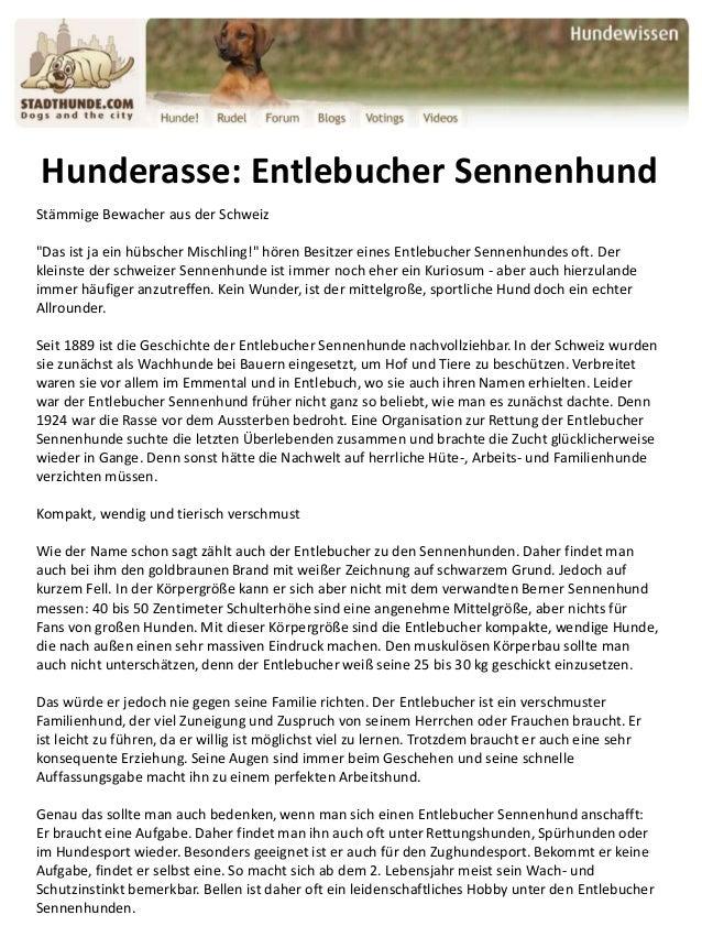 """Hunderasse: Entlebucher Sennenhund Stämmige Bewacher aus der Schweiz """"Das ist ja ein hübscher Mischling!"""" hören Besitzer e..."""