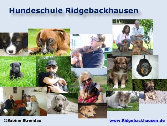 Hundeschule Ridgebackhausen www.Ridgebackhausen.de©Sabine Stremlau