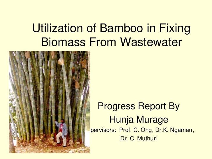 Utilization of Bamboo in Fixing  Biomass From Wastewater                    Progress Report By                  Hunja Mura...