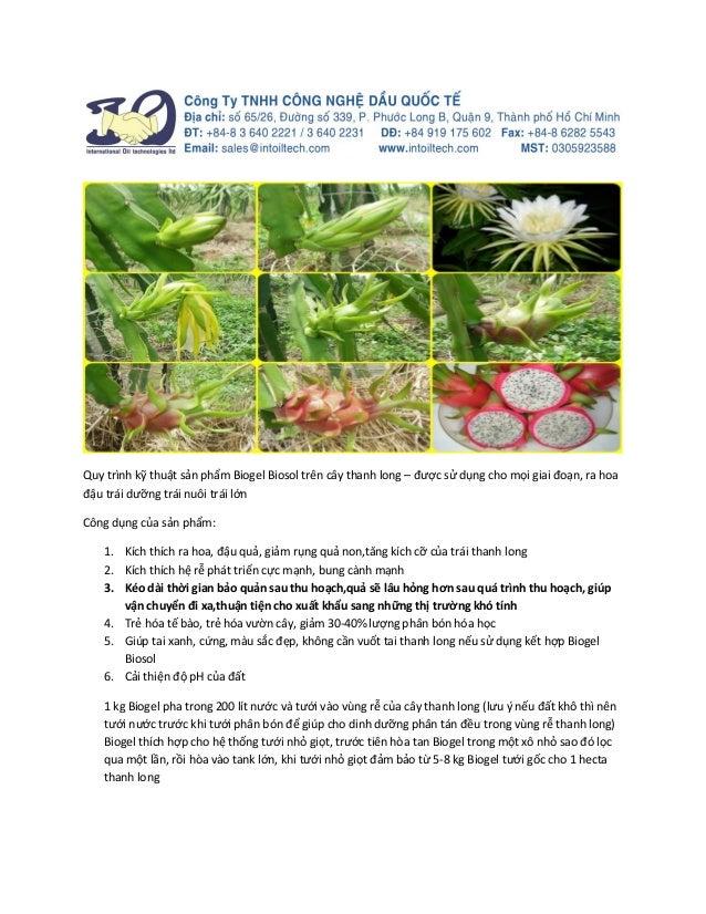 Quy trình kỹ thuật sản phẩm Biogel Biosol trên cây thanh long – được sử dụng cho mọi giai đoạn, ra hoa đậu trái dưỡng trái...