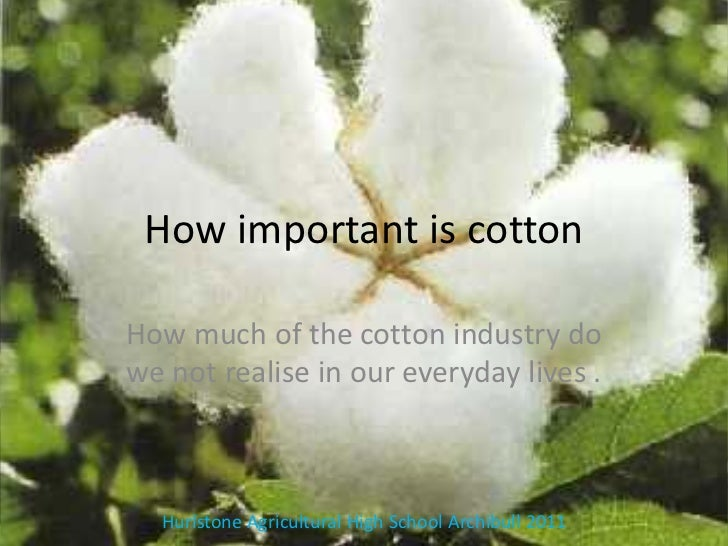 How important is cottonHow much of the cotton industry dowe not realise in our everyday lives .  Hurlstone Agricultural Hi...
