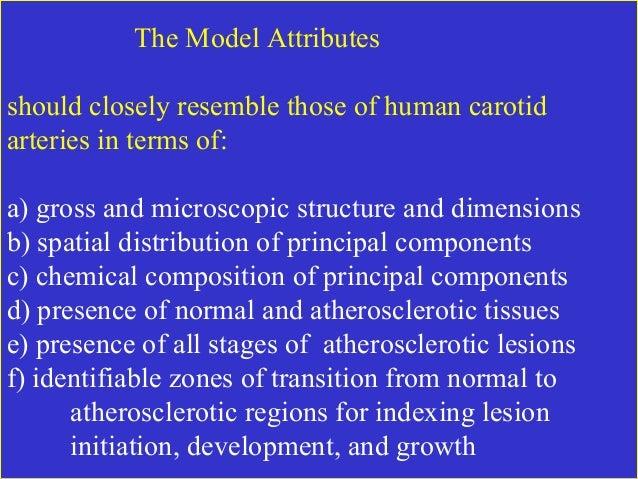 090 carotid atherosclerotic lesion model Slide 2