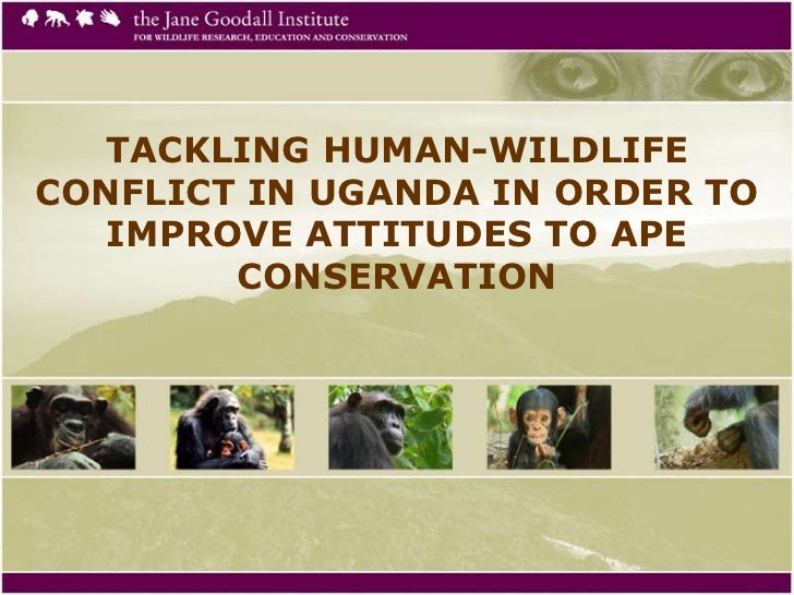 TACKLING HUMAN-WILDLIFECONFLICT IN UGANDA IN ORDER TO   IMPROVE ATTITUDES TO APE        CONSERVATION